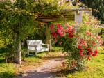 Die Pergola am Rosenweg mit Sitzbank und blühenden Rosen auf dem Kienberg